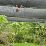 Schmetterling im Netz