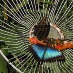 Schmetterlinge bei der Fütterung