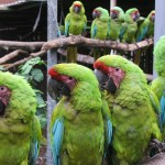 Papageien auf der Stange